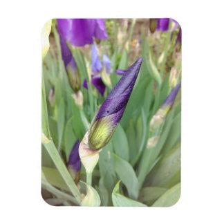 Imán Flexible Brote púrpura del iris alemán