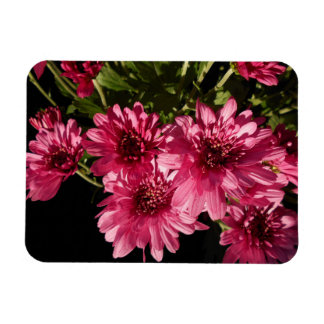 Imán Flexible Crisantemos rosados