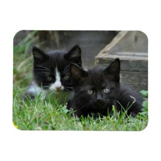Imán Flexible Dos gatitos de lado a lado