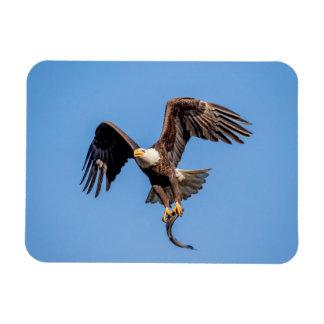 Imán Flexible Eagle calvo con un pescado