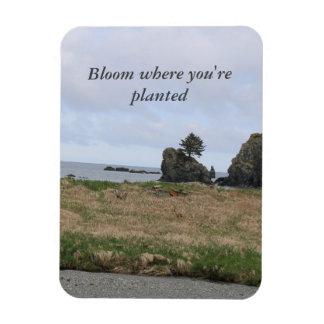 Imán Flexible Floración donde le plantan