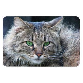 Imán Flexible Gato de ojos verdes mullido del gatito del tigre