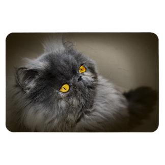 Imán Flexible Gato negro gris oscuro mullido con los ojos