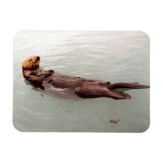Imán Flexible La foto linda de la nutria de mar de Alaska diseñó