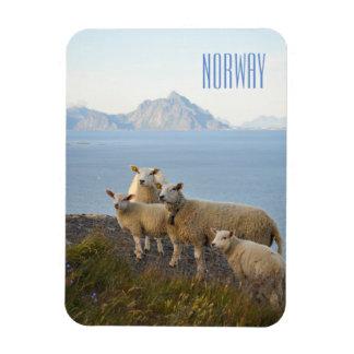 Imán Flexible Las ovejas de Noruega en la montaña rematan el
