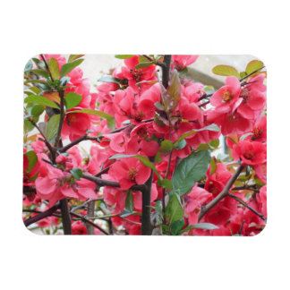 Imán Flexible Membrillo japonés rojo hermoso