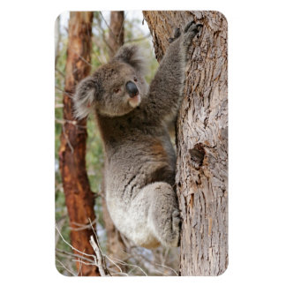 Imán Flexible Oso de koala