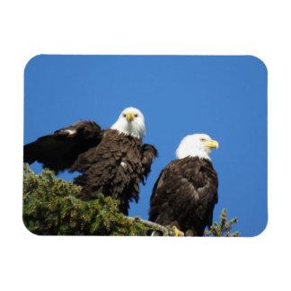 Imán Flexible Sr. y señora Eagle