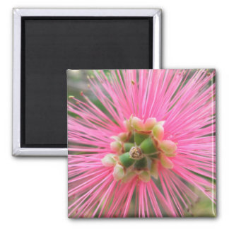 Imán Flor rosada del árbol de goma