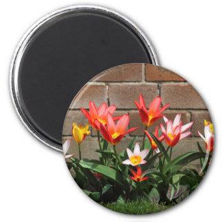 Imán floración