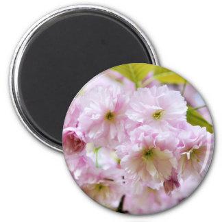 Imán Flores rosadas en cerezo japonés en la ciudad