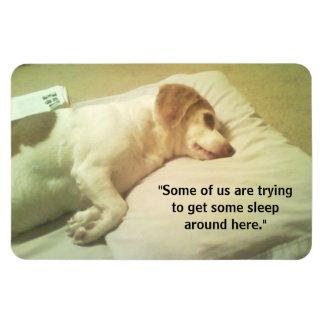 """Iman Foto del beagle """"que intenta conseguir a algunos"""
