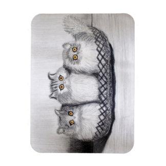 Iman gatitos