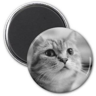 Imán gato