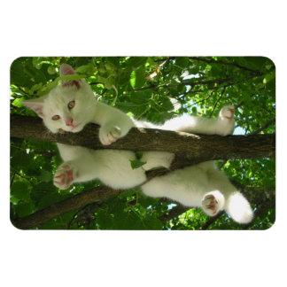 Iman Gato blanco magnífico que cuelga hacia fuera en