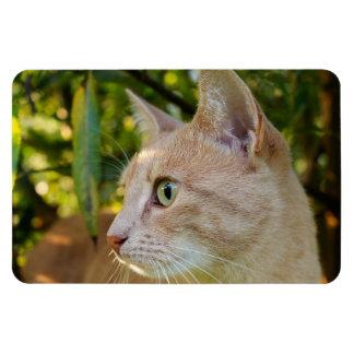 Iman Gato de ojos verdes rojizo del gatito