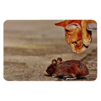 Iman Gato de tigre anaranjado juguetón con un ratón