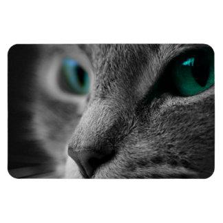 Iman Gato Furred gris con los ojos verdes llamativos