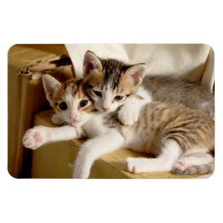 Iman Gemelos lindos y mimosos del gatito que se relajan
