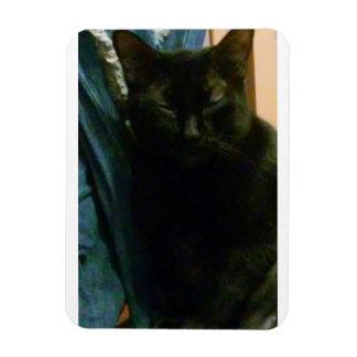 Imán gordo del gato negro