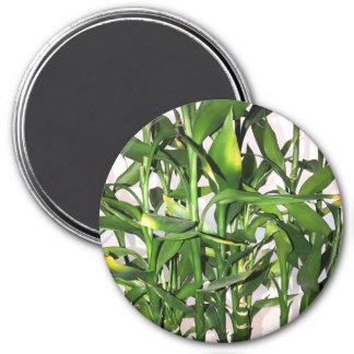 Imán Hojas del verde y planta de la casa de los brotes