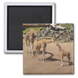 Imán Jirafa del bebé y familia de la jirafa