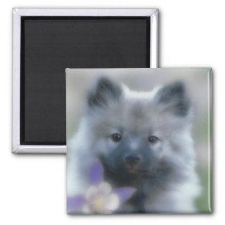 Imán Keeshond y Columbine - fotografía del perro