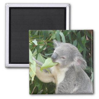 Imán Koala que come la hoja de la goma