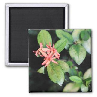 Imán La flor coralina exótica tropical, Kew cultiva un
