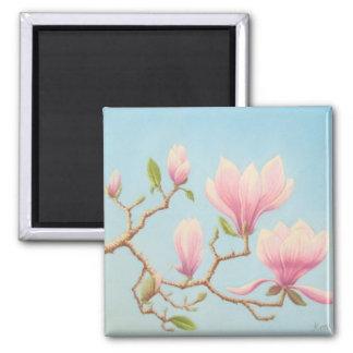 Imán Magnolias en la floración, jardines de Wisley en