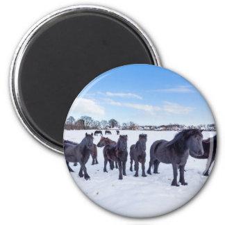 Imán Manada de los caballos negros del frisian en nieve