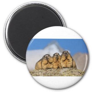Imán Marmotas alpinas