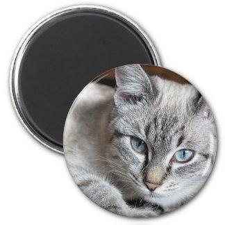 Imán Mascota de la caballa de Mieze del gatito del gato