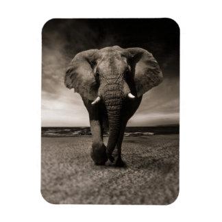 Imán místico del elefante blanco y negro