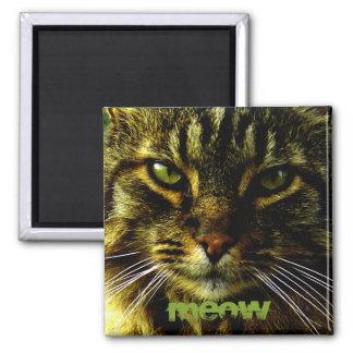 Imán Ojos de gato que hipnotizan la foto
