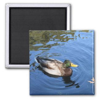 Imán Pato conservador del pato silvestre del agua del