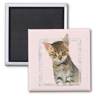 Imán Pintura del gatito del Tabby con el falso marco de
