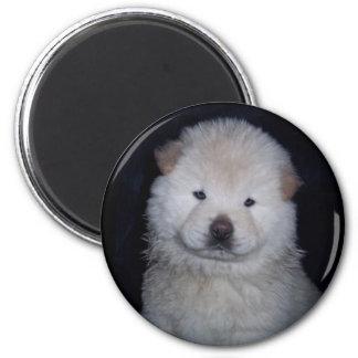 Imán poner crema del perro chino de perro chino