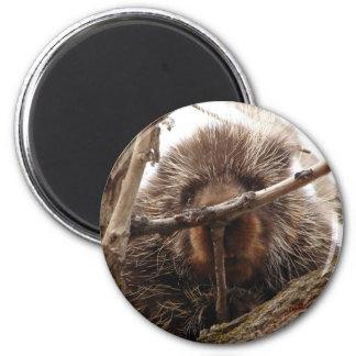 Imán Puerco espín encima de una foto animal redonda del