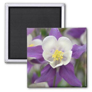 Imán púrpura de Columbine