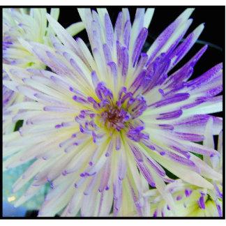 Imán púrpura de la flor esculturas fotográficas