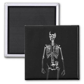 Imán Radiografía esquelética imanes de 2 pulgadas