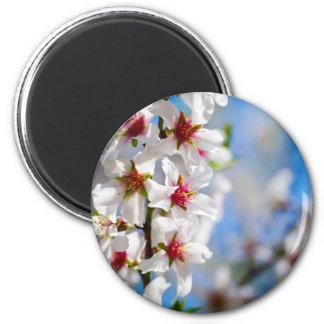 Imán Rama de árbol floreciente con las flores blancas