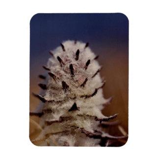 Iman Refrigerador lanoso ártico del Wildflower de