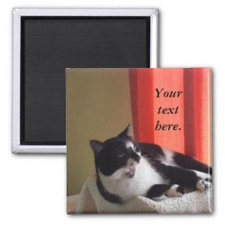 Imán Su texto redacta los imanes de la foto del gato