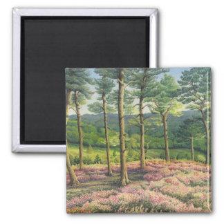 Imán Tarde Sun, pinos de las colinas de Surrey en