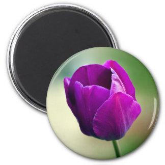 Imán Tulipán púrpura