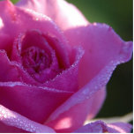 Imanes de la flor imán fotoescultura