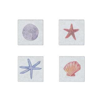 Imanes de las estrellas de mar y del Seashell