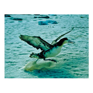 IMM. albatros Cortocircuito-atado Postal